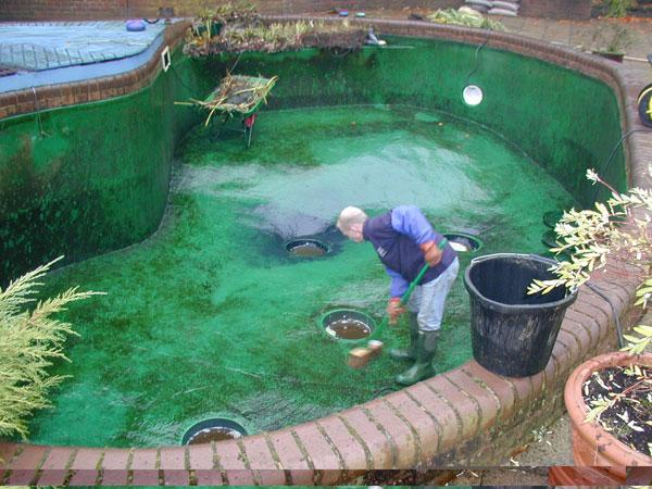 D ch v li n quan h c for Pond filter cleaning maintenance