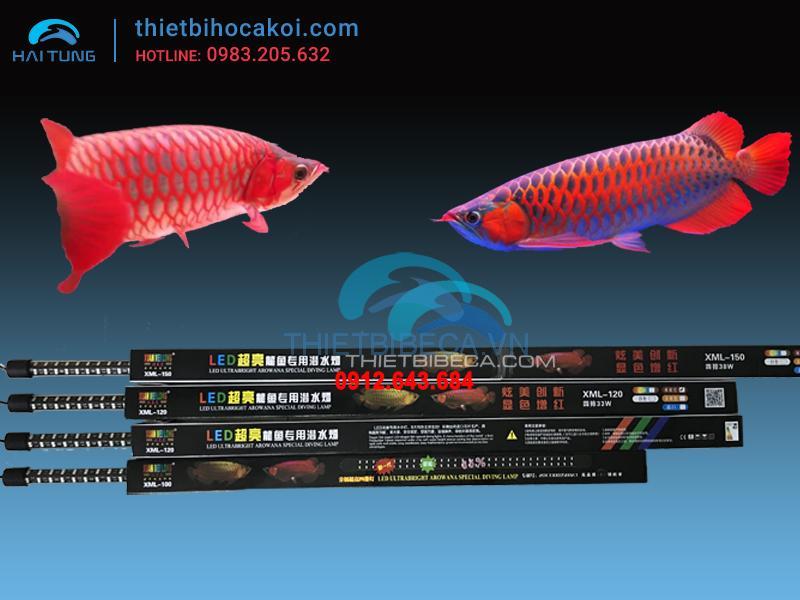 Đèn led cá rồng XML150 hồng 4 hàng bóng