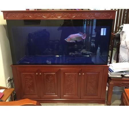 Bể cá rồng VH 155-C có chạm chân