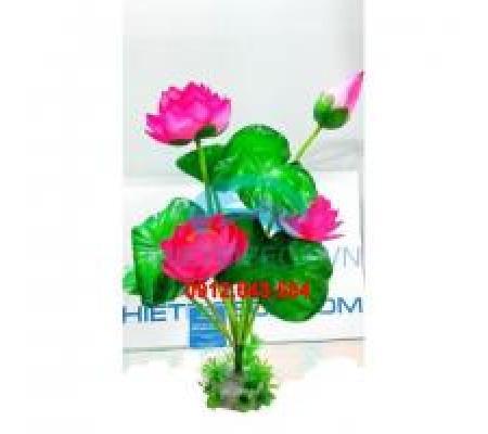 Bụi hoa sen nhựa