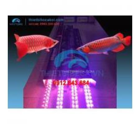 Đèn led cá rồng XML120 hồng 4 hàng bóng