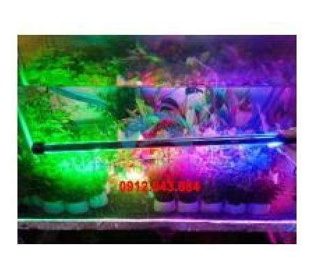 Đèn Led Caibao T4KG 40LED 3 màu